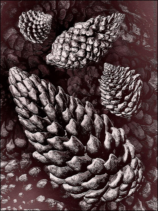 Pinecones - By Robert J. Tiess