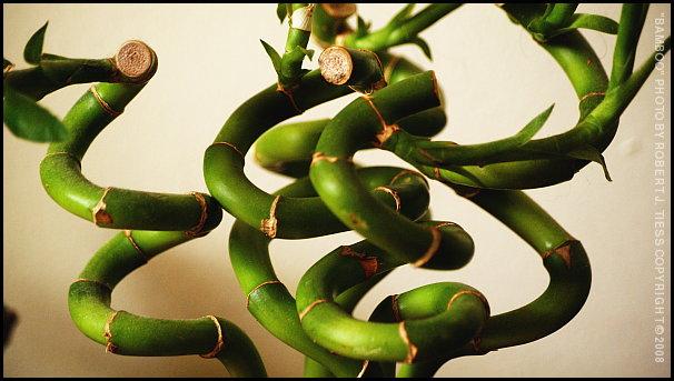 Bamboo (2) - By Robert J. Tiess
