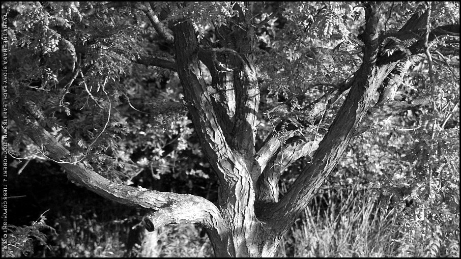 Every Tree Has a Story; Each Leaf Its Own, Too - By Robert J. Tiess