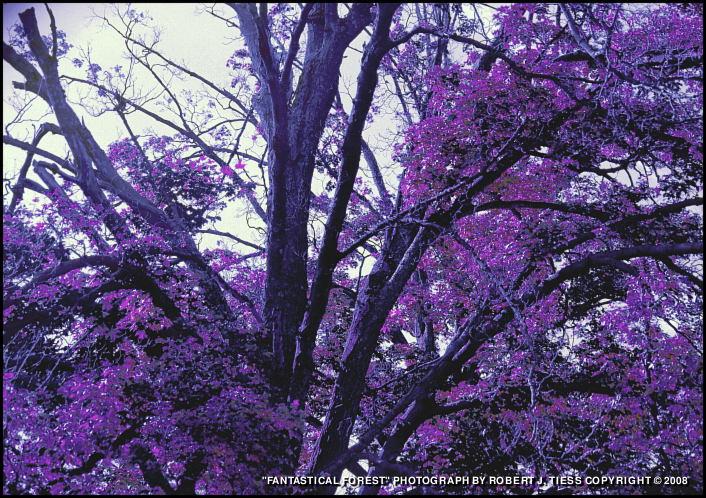 Fantastical Forest - By Robert J. Tiess