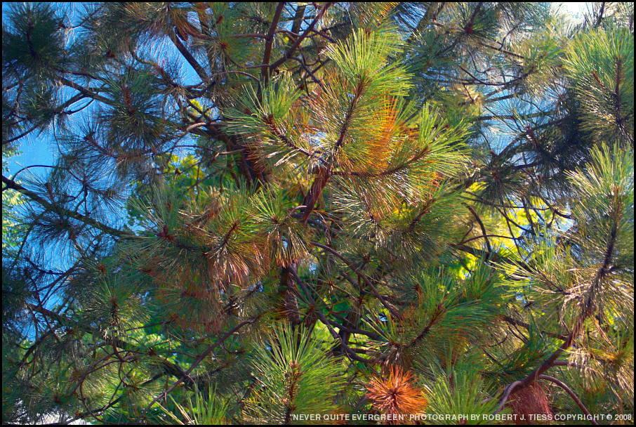 Never Quite Evergreen - By Robert J. Tiess