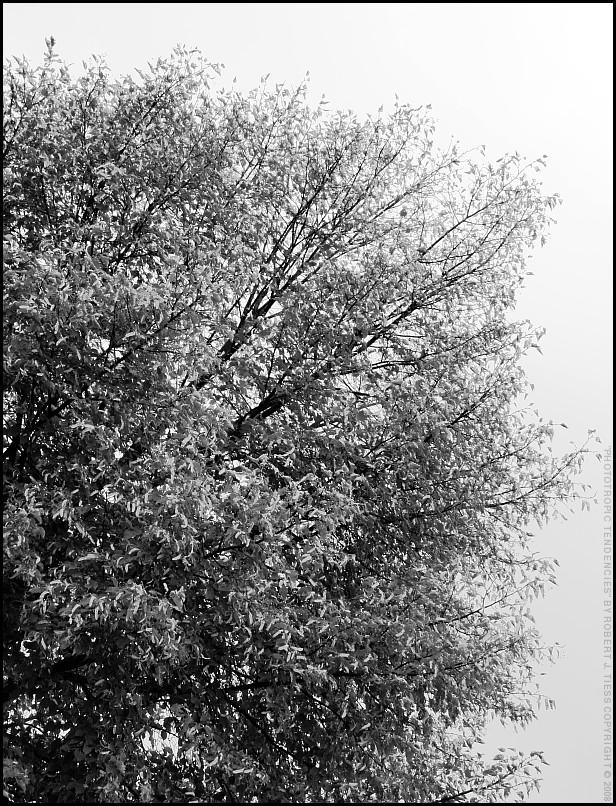 Phototropic Tendencies - By Robert J. Tiess