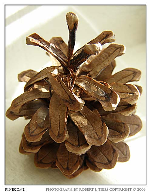 Pinecone - By Robert J. Tiess