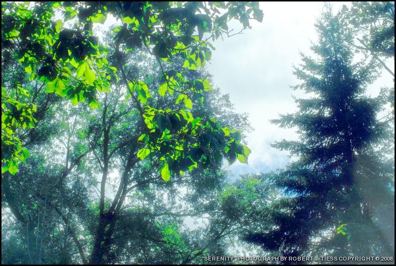 Serenity - By Robert J. Tiess