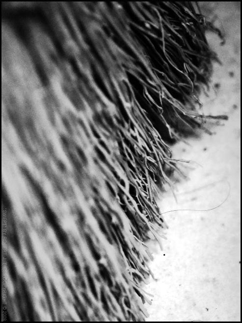 Swept - By Robert J. Tiess