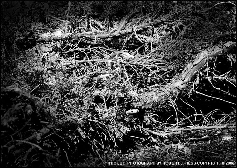 Thicket - By Robert J. Tiess