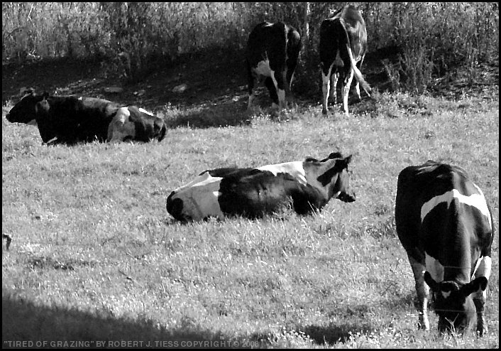 Tired of Grazing - By Robert J. Tiess