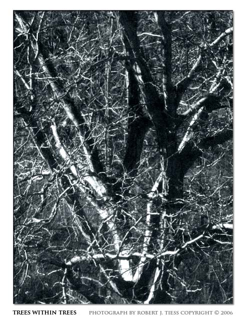 Trees within Trees - By Robert J. Tiess